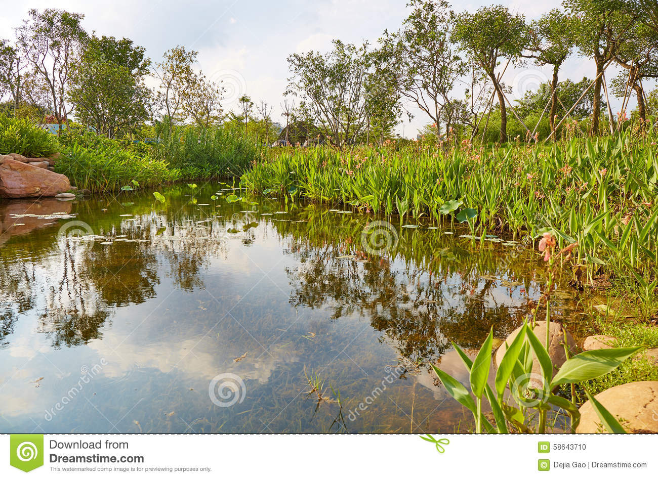 Small garden pond stock photo image 58643710 for Garden pond unlimited