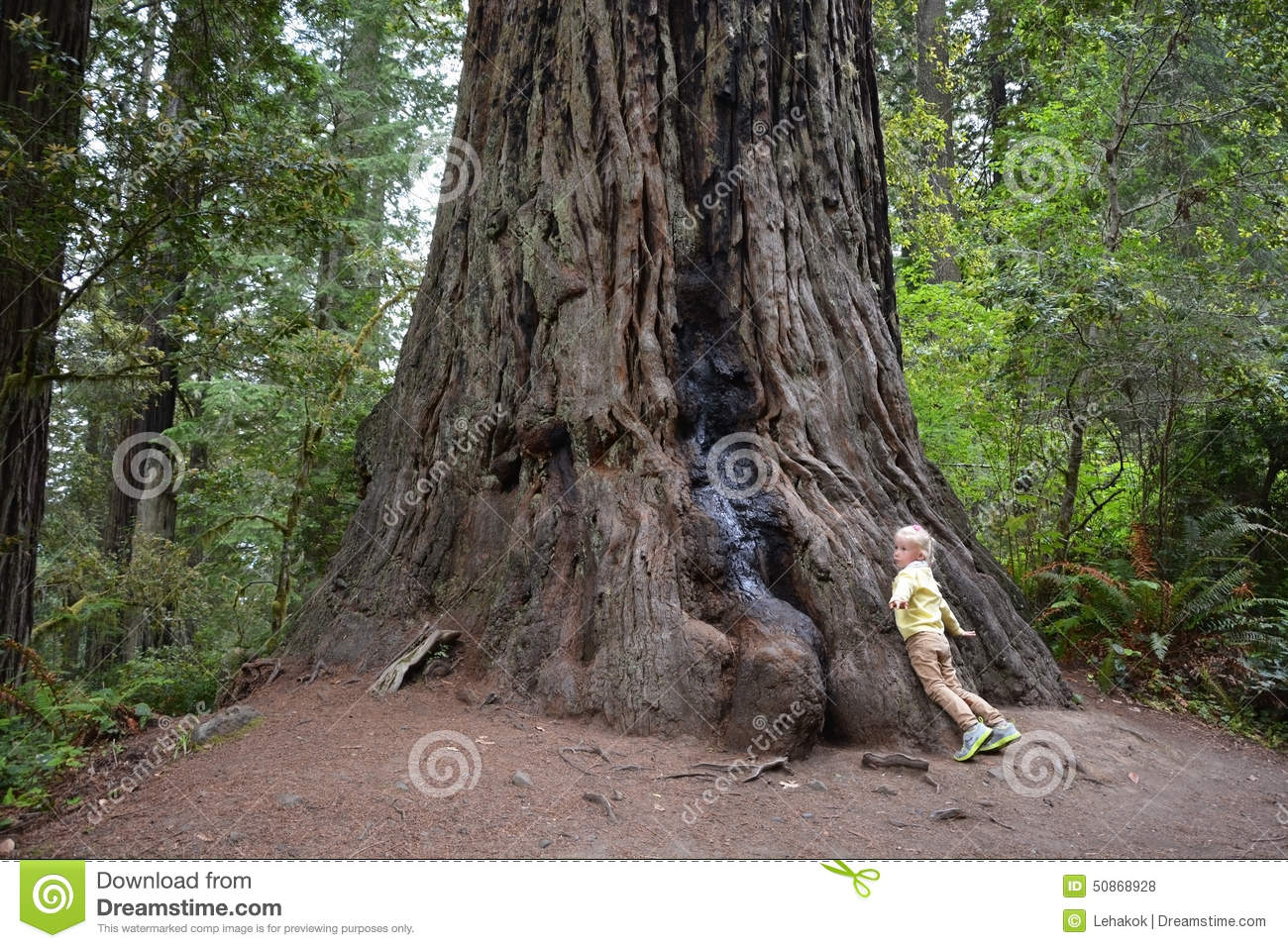 Small girl and giant tree
