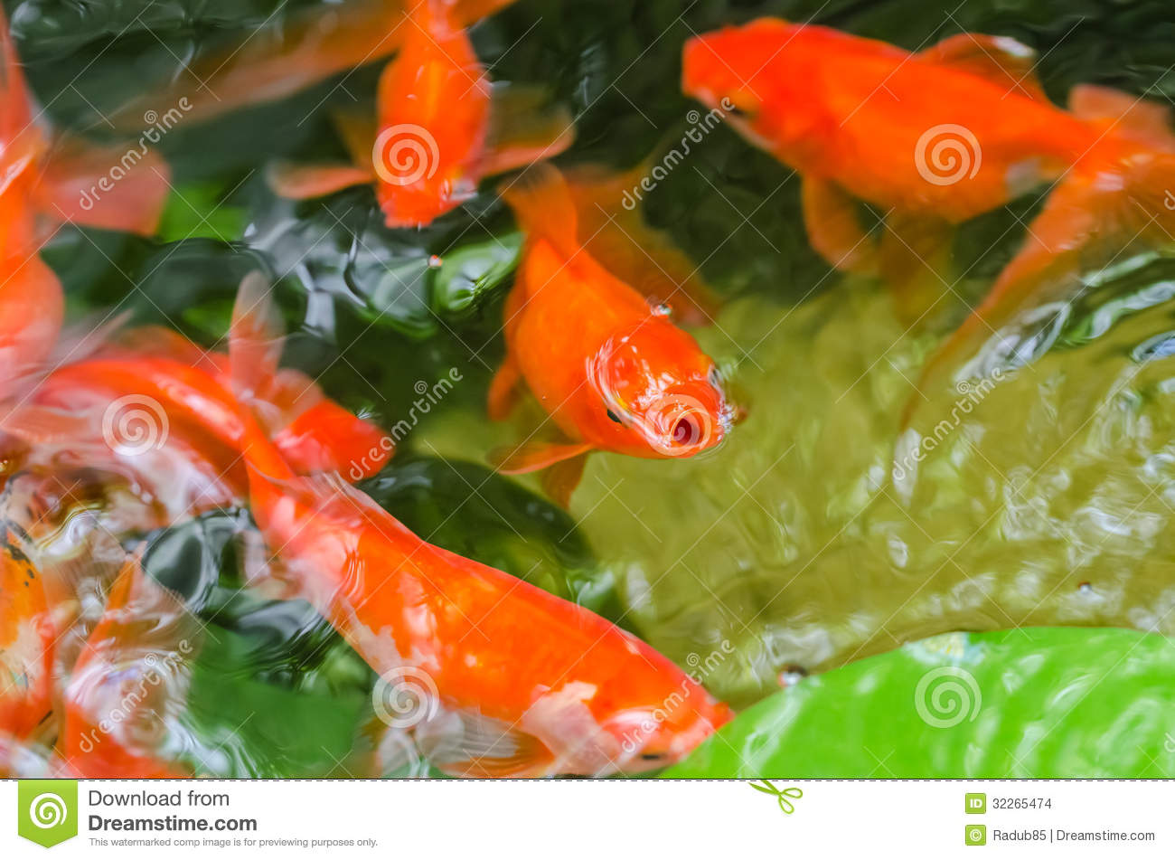 Small Goldfish In A Pond Stock Images - Image: 32265474