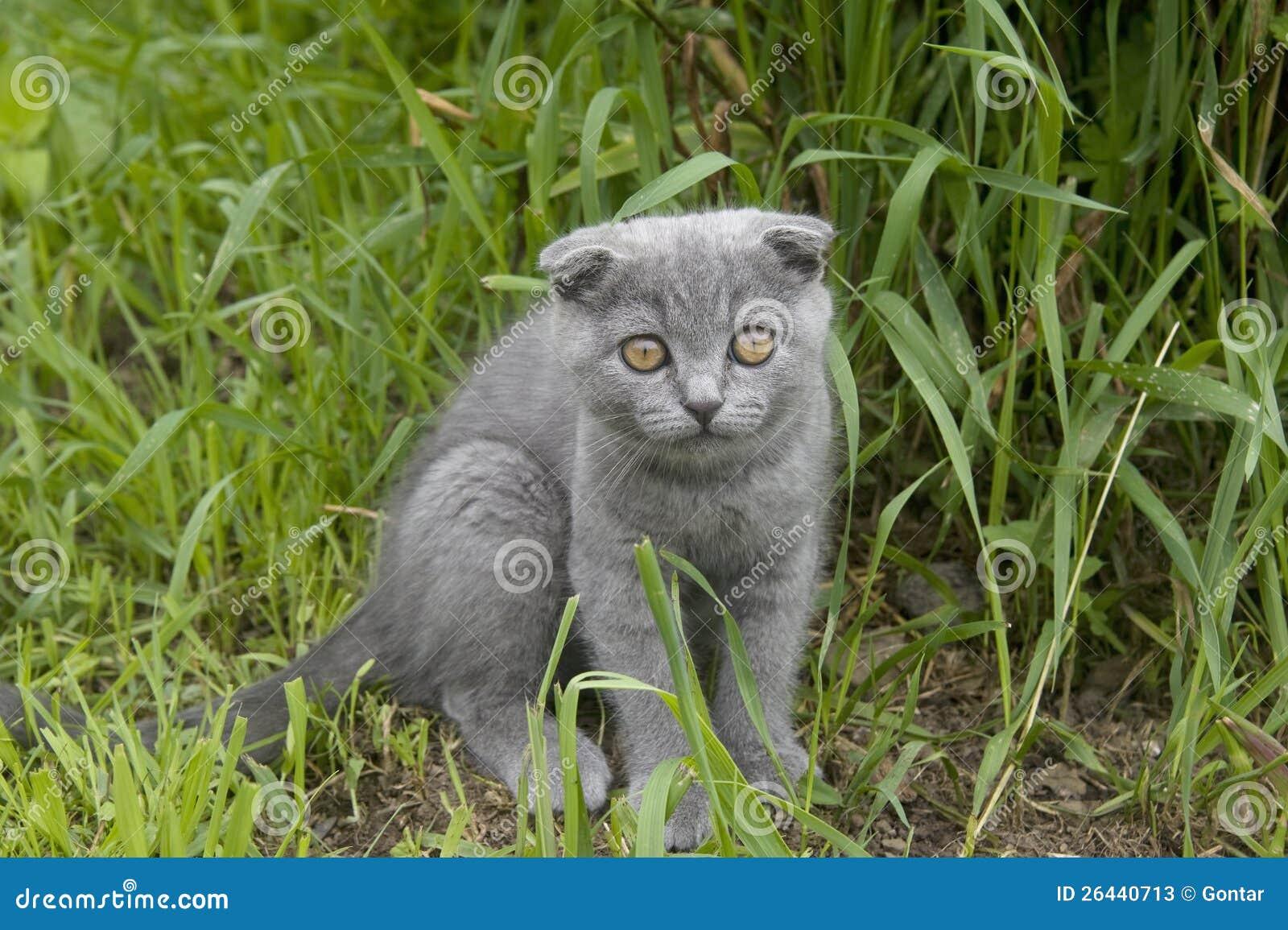 cheshire cat tsum tsum