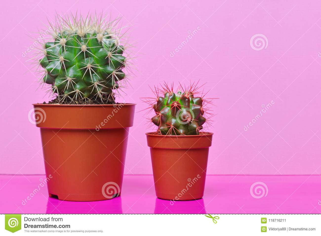 Small Green Cacti On Bright Pink Background Stock Image Image Of