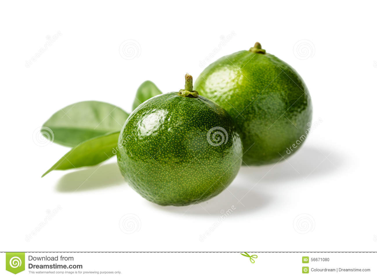 Small Green Lime Stock Photo  Image 56671080. Kitchen Organization Tools. Pictures Of Country Kitchens. Kitchen Cabinets Organizers. Country Kitchen Donuts. Black & White Kitchen Accessories. Modern Kitchen Sinks. Buy Modern Kitchen Cabinets Online. Country Kitchens Cabinets
