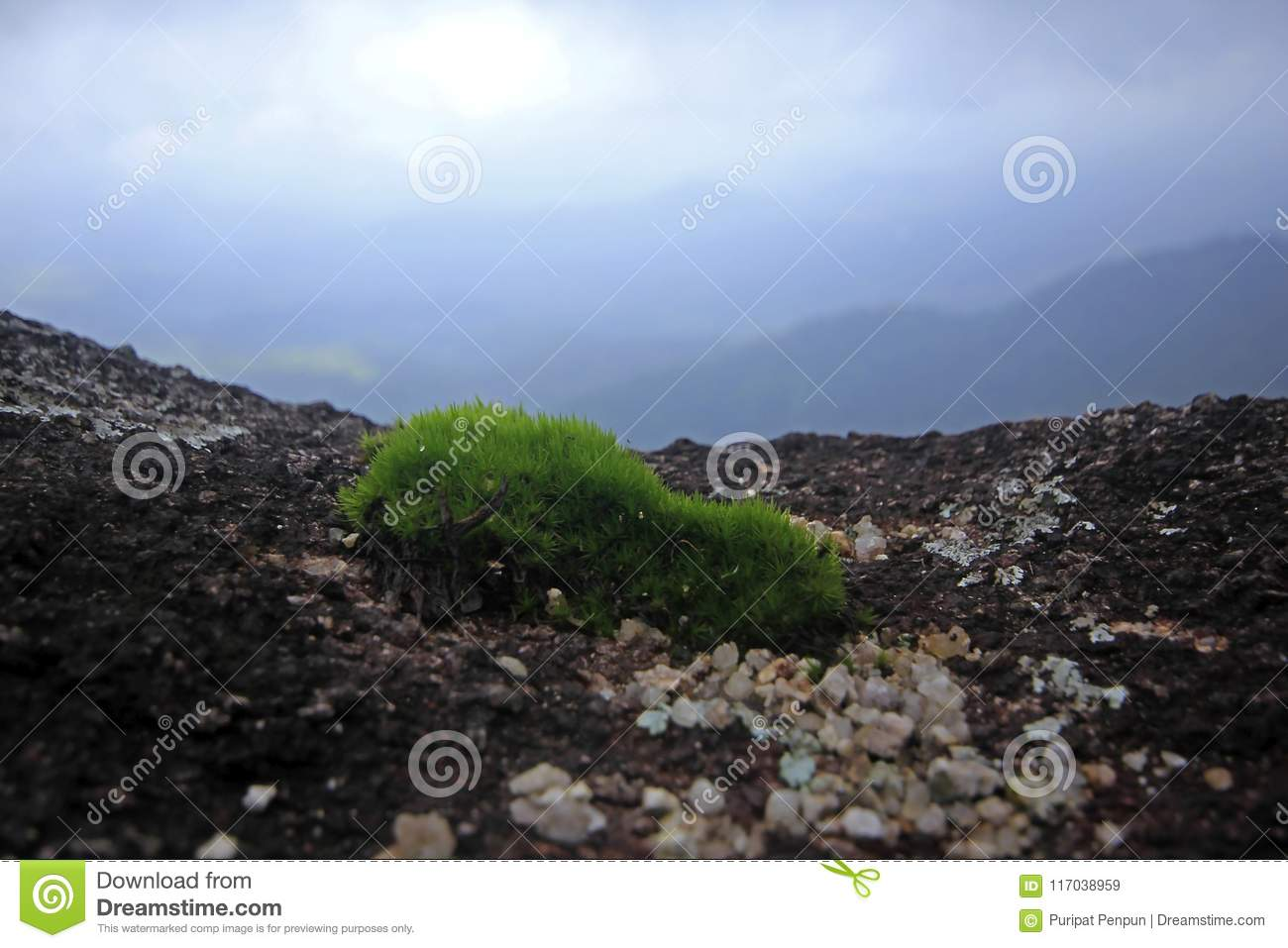 Moss green, small tree in nature on rocky ground.