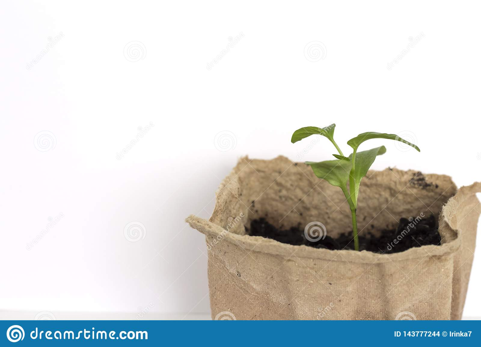 A small green pepper sprout growing in an eco-friendly organic pot on a white background with a copy of the space