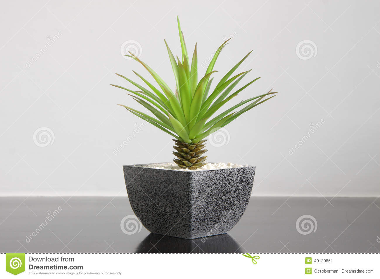 Small green plant for home decoration stock photo image for Decoration interieur maison 90m2