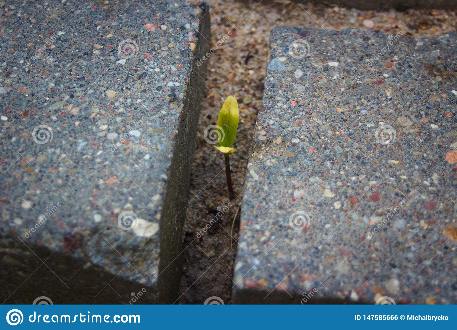 Small green plant surrounded by gray brick