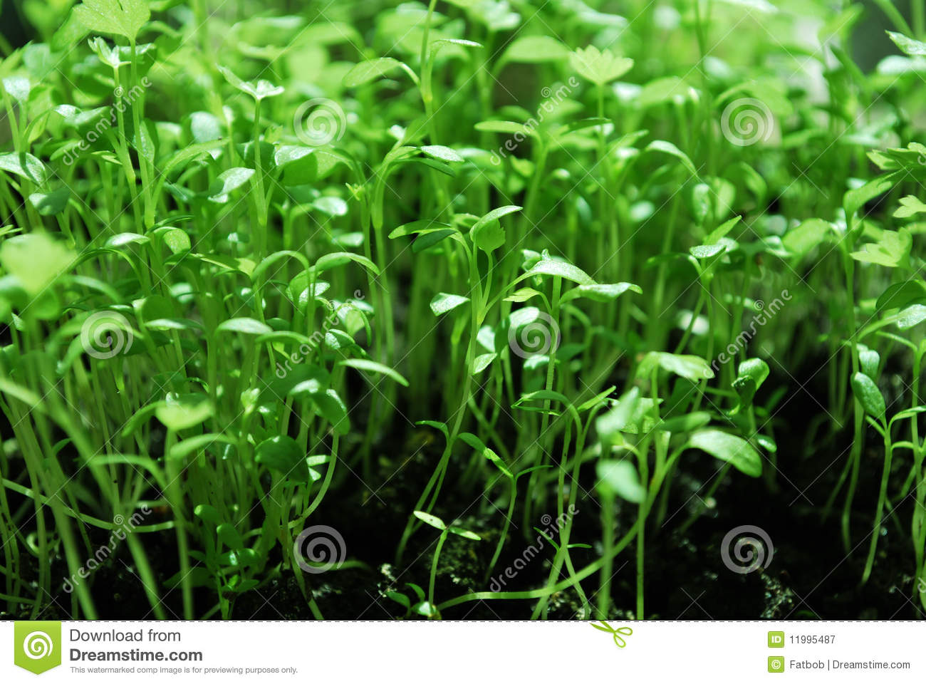 Small Green Plants Royalty Free Stock Photography Image