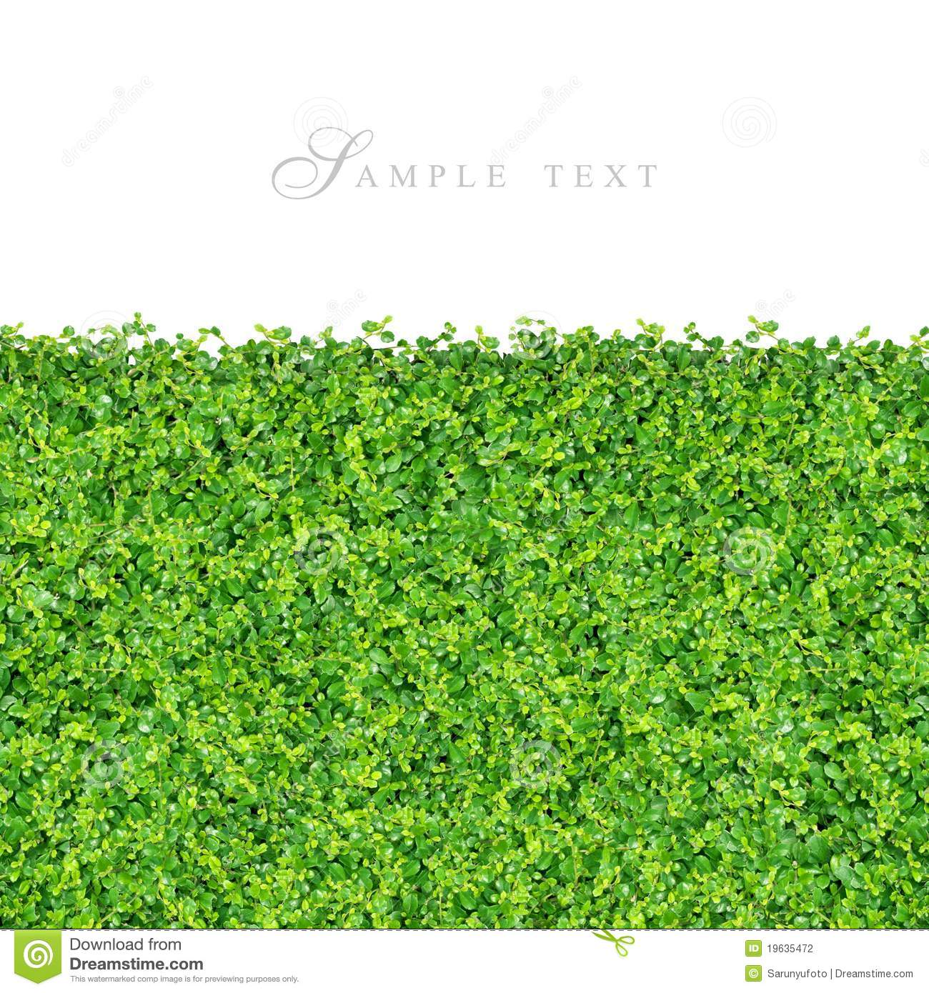 Small Green Plants And Grass Stock Photography Image