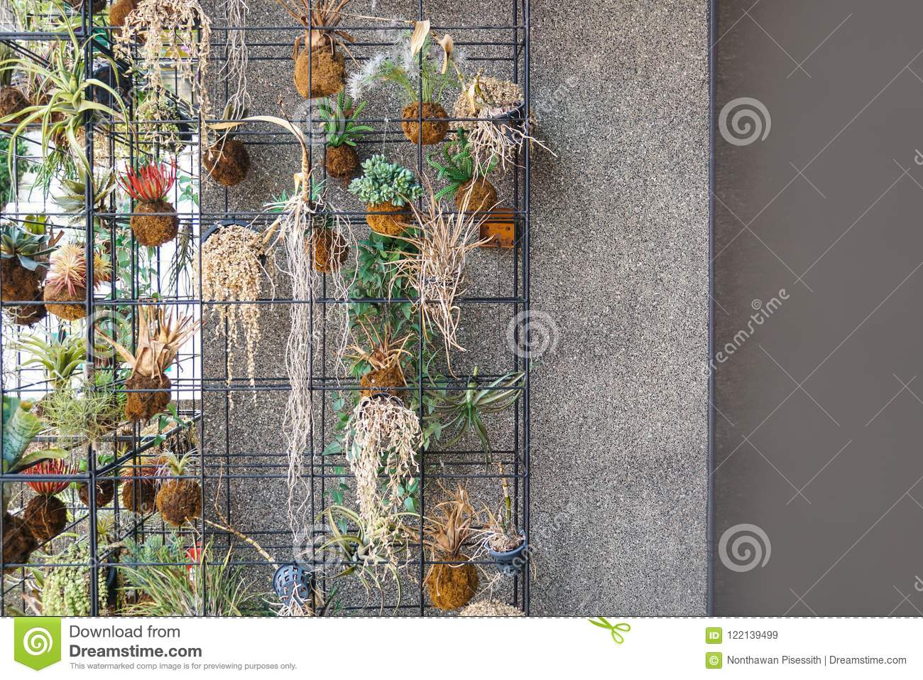 Small Green Plant Wall Decoration Stock Image Image Of Home Exterior 122139499
