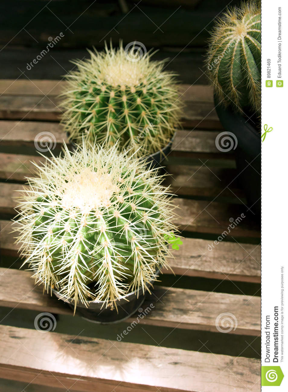 Bench Cactus Decoration Green Round Sitting Small Sphere Spikes Table ...