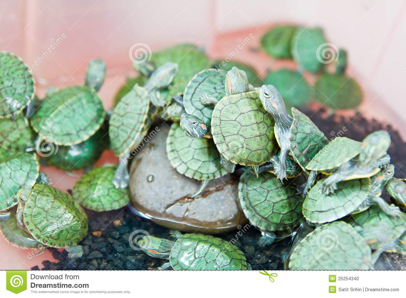Small Green Turtle Stock Photo - Image: 25254340