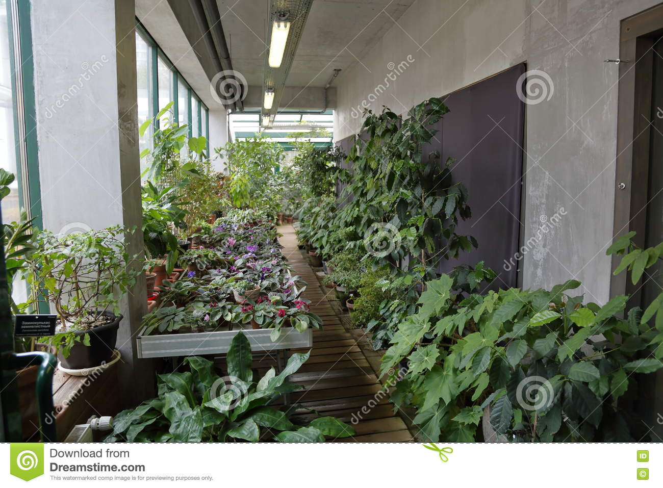 Fabulous Small Greenhouse For Plants Stock Image Image Of Growing Home Interior And Landscaping Oversignezvosmurscom