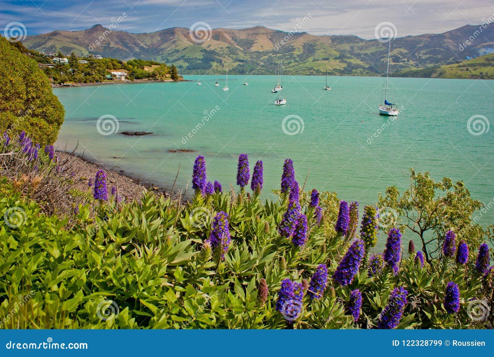 Small harbour of Akaroa on peninsula near Christchurch, New Zealand