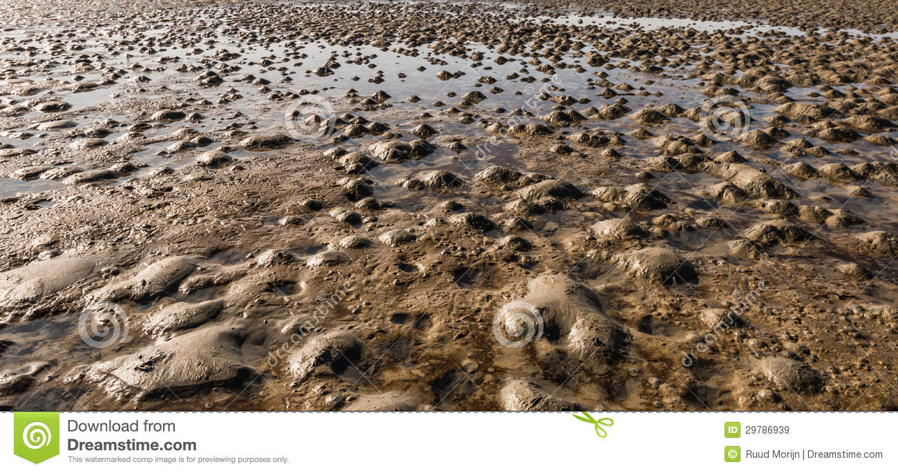 Closeup of a muddy beach at low tide royalty free stock for Is soil living
