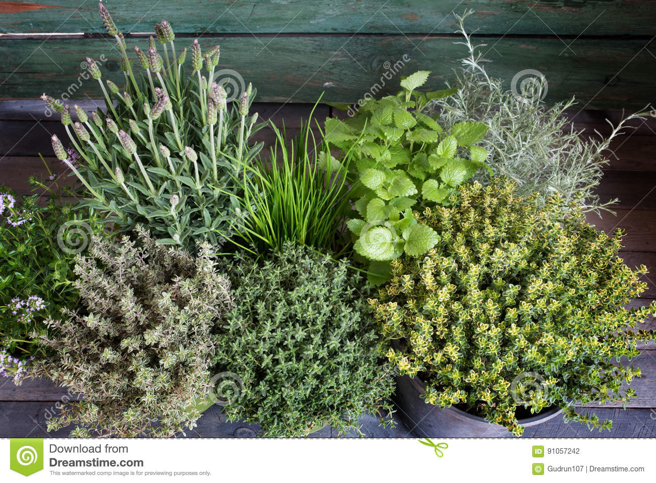Download Small Herb Garden On Wood Stock Photo. Image Of Mediterranean    91057242