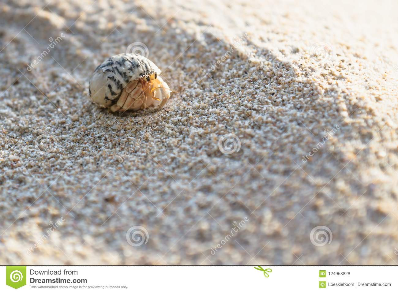 Small hermit crab in the sand of the island Koh Mook, Thailand