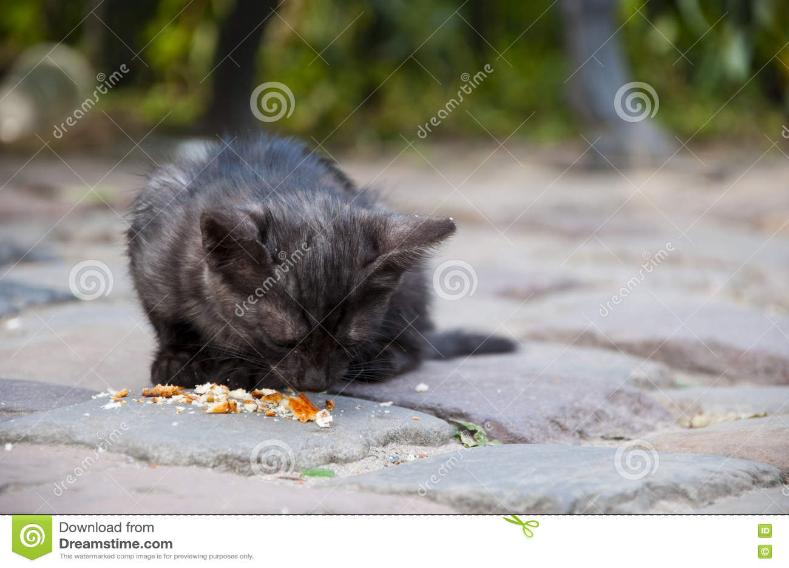 Cat Gig Eyes Sickness