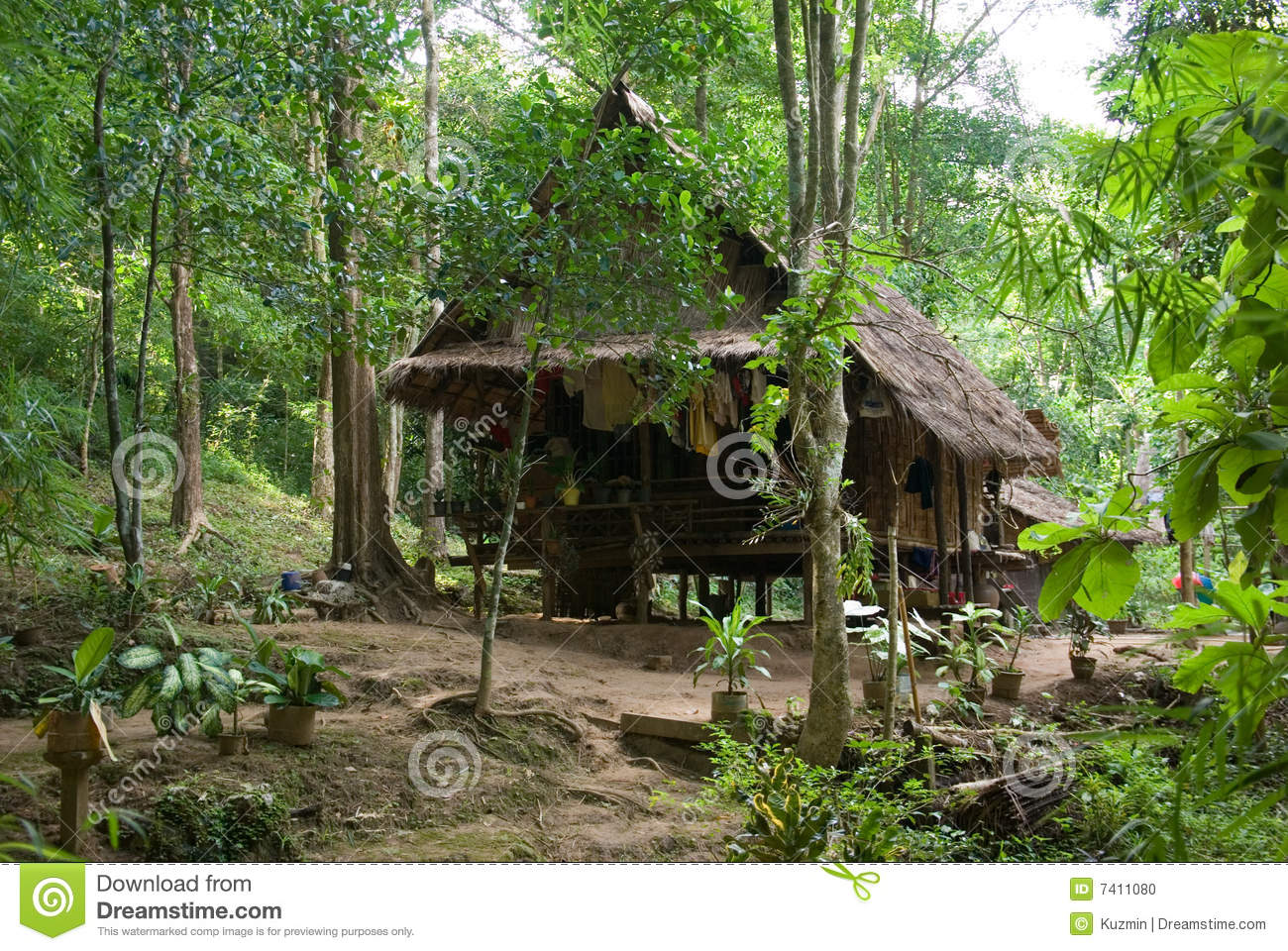 Small House In Jungle Stock Photo Image 7411080