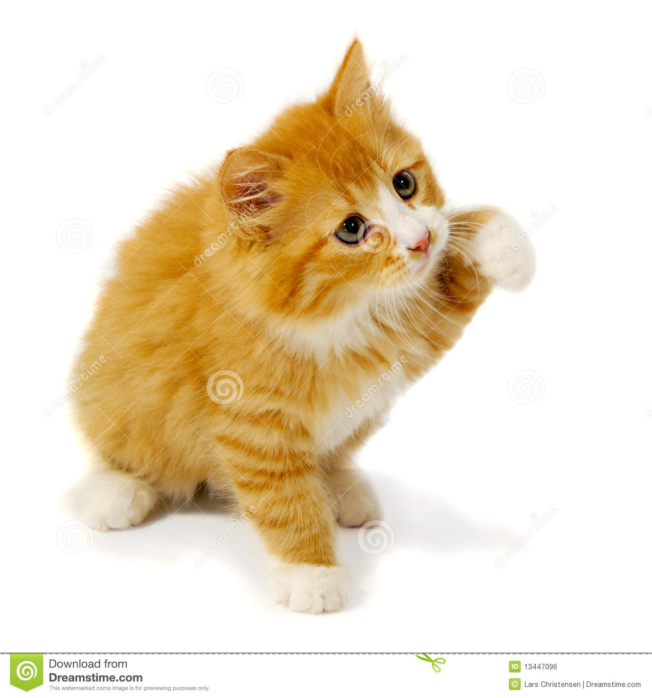 Http Www Dreamstime Com Royalty Free Stock Image Small Kitten Image13447096