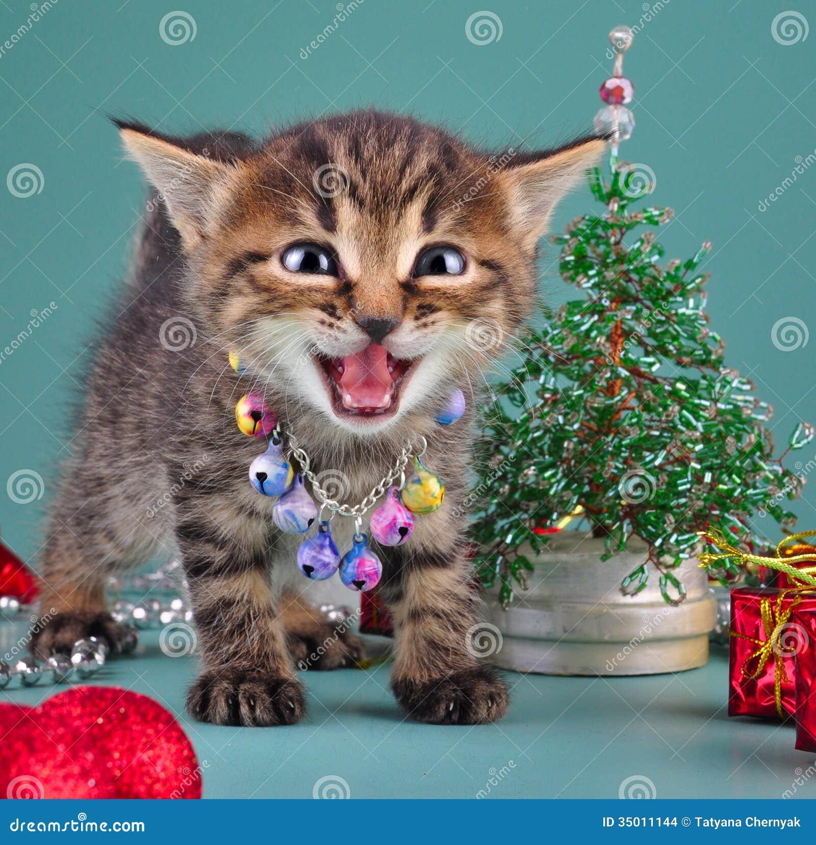 Small kitten among Christmas stuff Stock Images