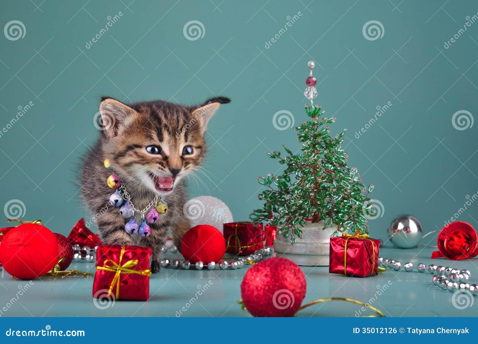 Pics Of Christmas Stuff small kitten among christmas stuff royalty free stock image