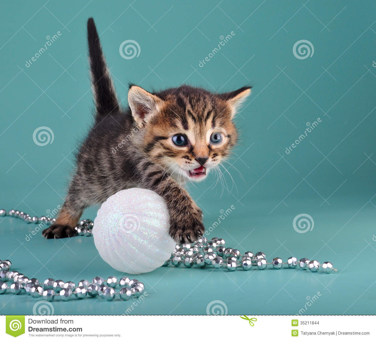 Pictures Of Christmas Stuff small kitten among christmas stuff stock images - image: 35211844