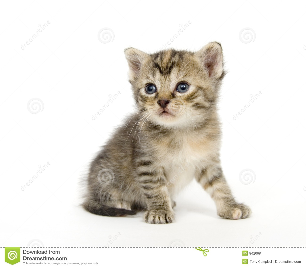 Small kitten playing on white background