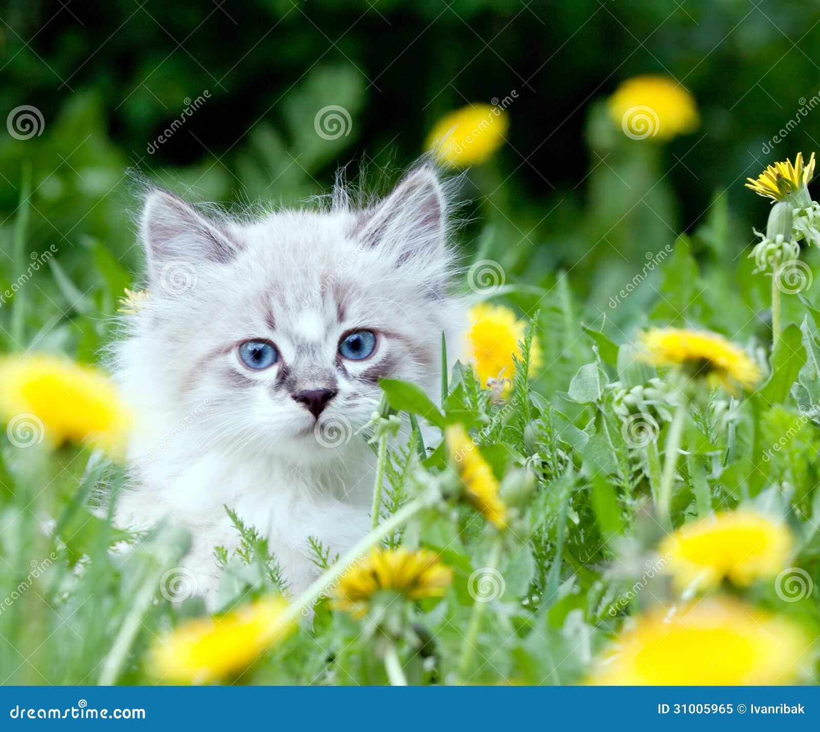 Small kitten sitting in the dandelions