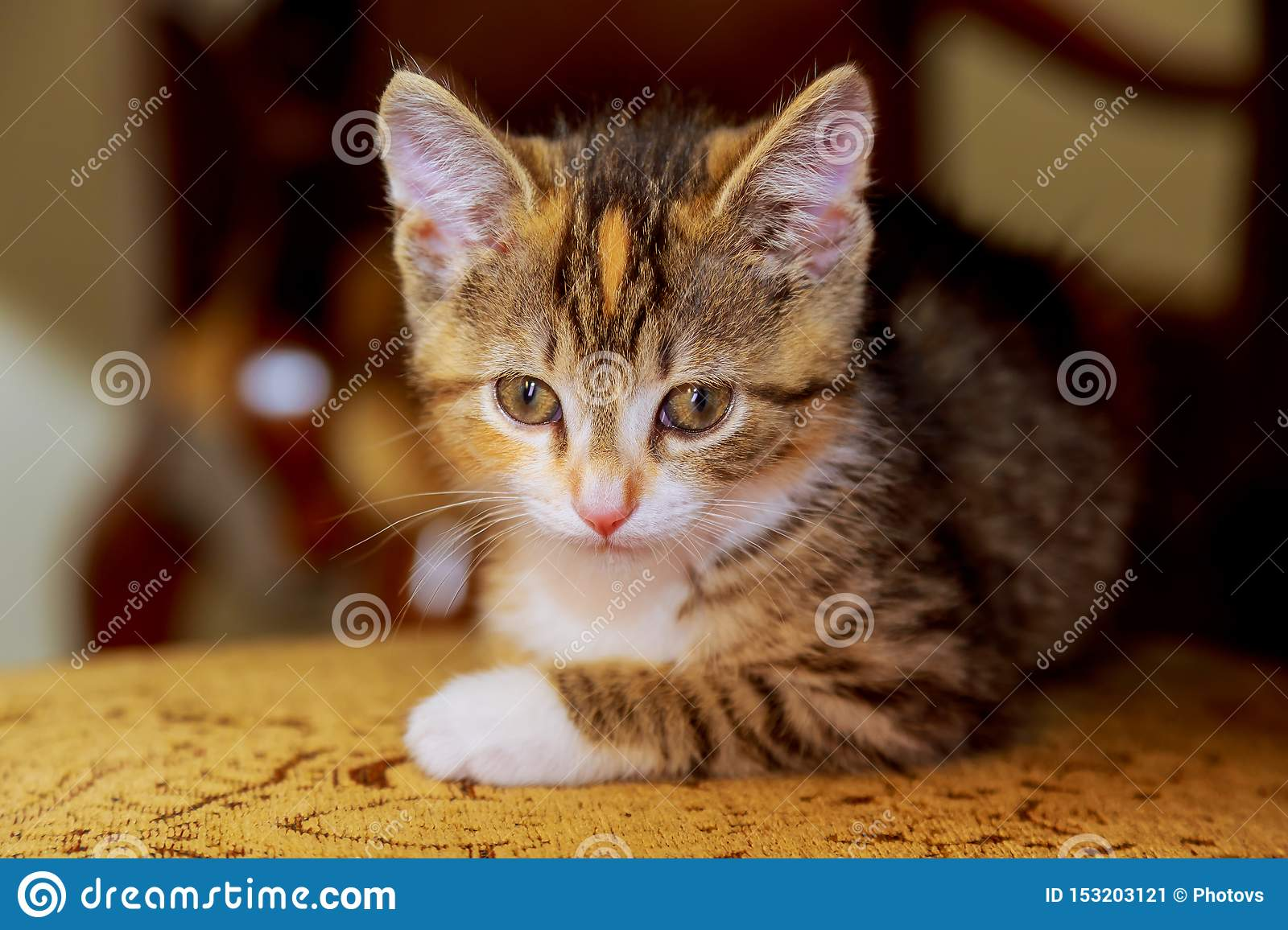 a small kitten sitting on wooden chair
