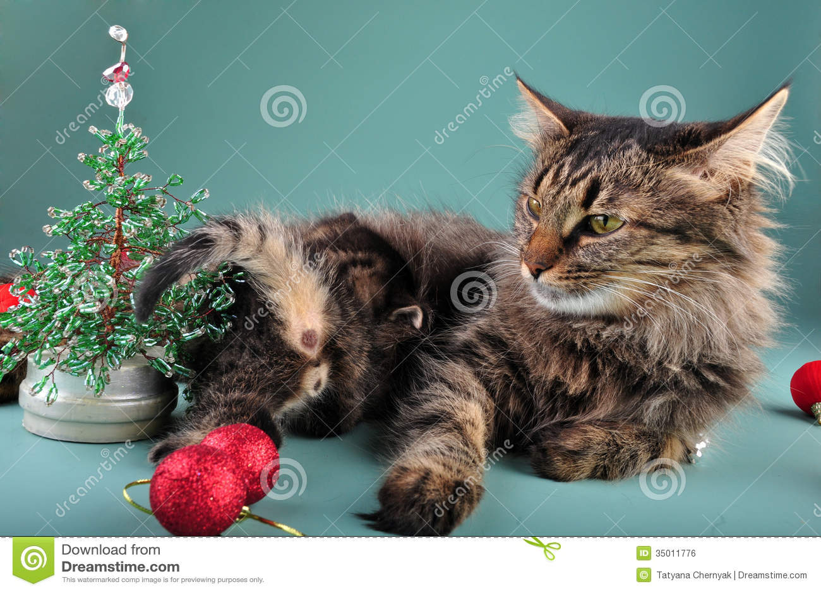 Pictures Of Christmas Stuff small kittens among christmas stuff stock photo - image: 35011220