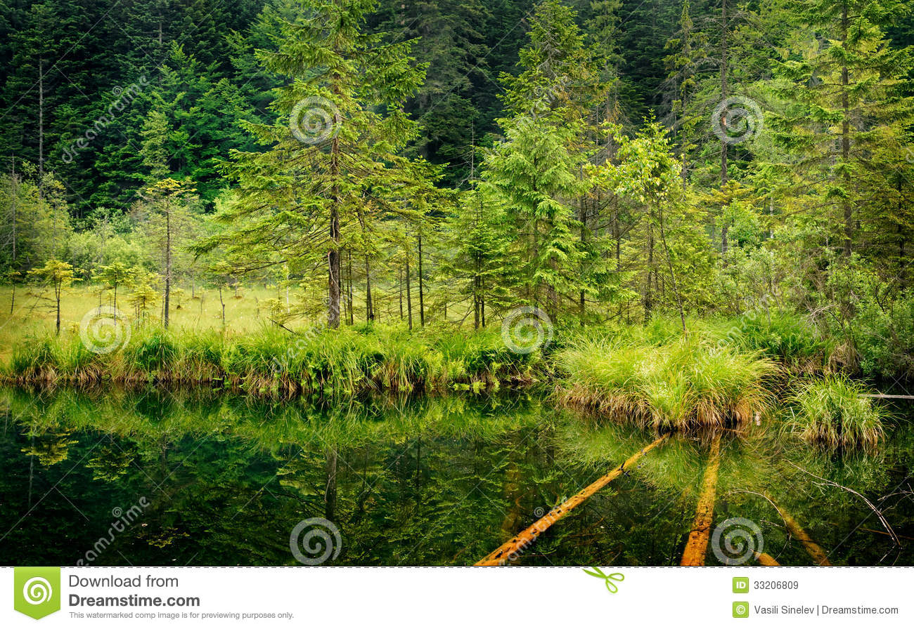 download calming forest picture - photo #43