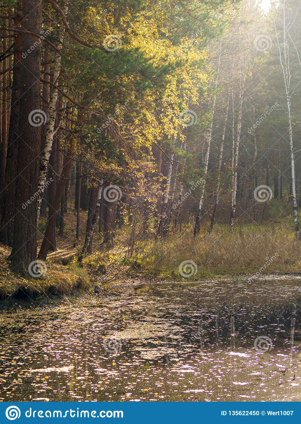A small lake with pines and birches on the shore in the autumn forest