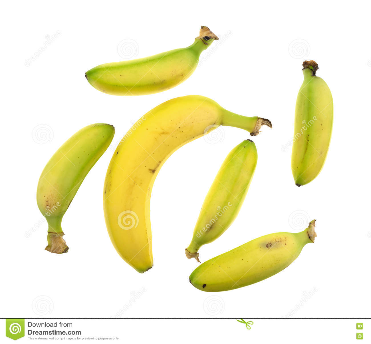 small and large bananas on a white background stock photo - image of