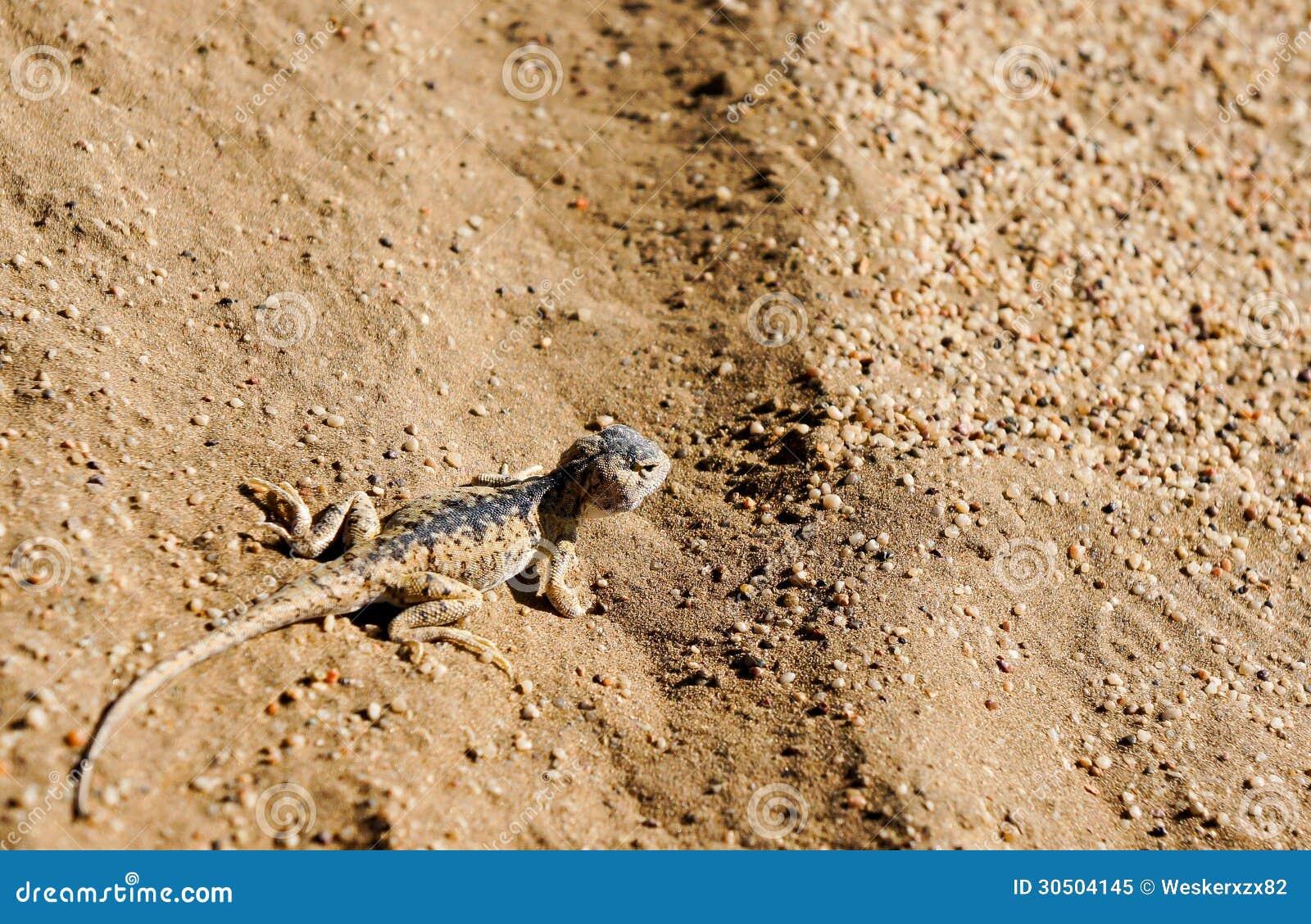 Small Lizard Stock Image   CartoonDealer.com #30504145