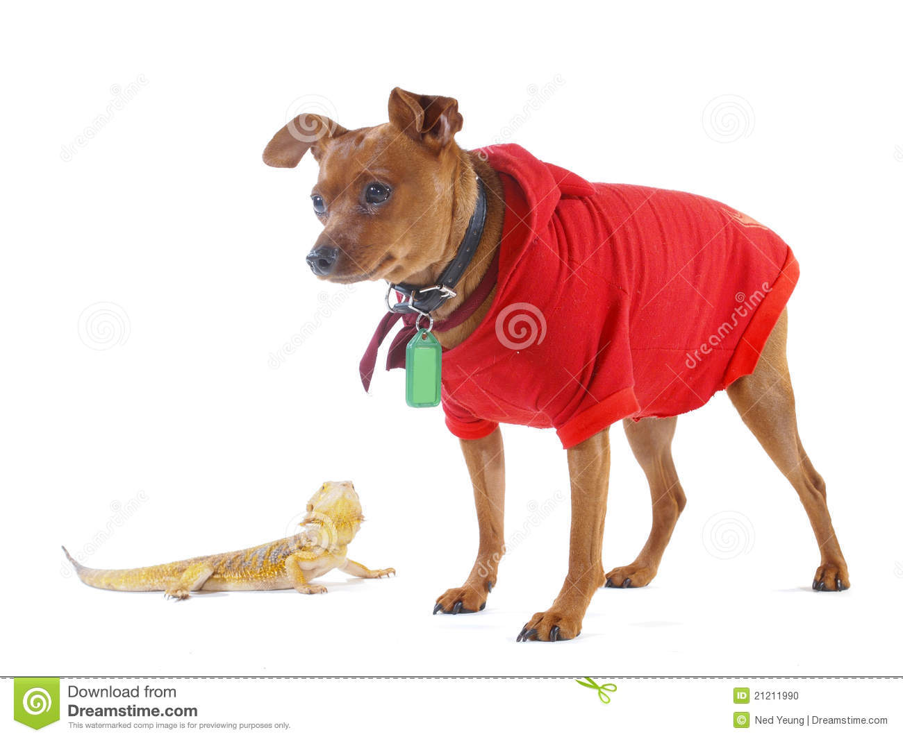 Small Lizard and Smiling Dog