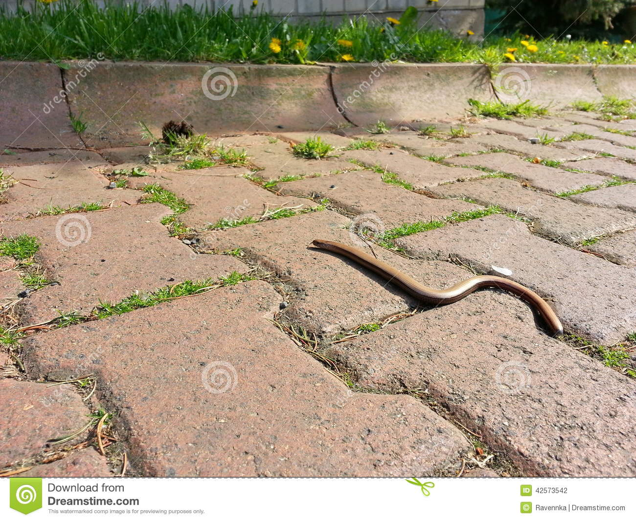 Download Small lizard on the street stock photo. Image of worm - 42573542