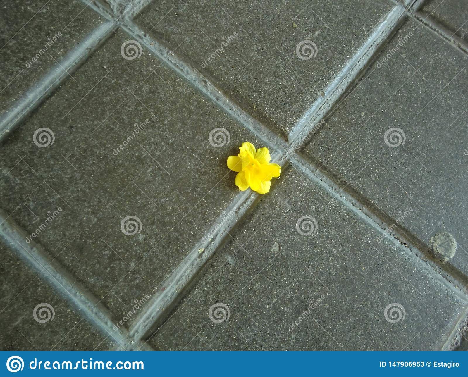 Small lone yellow flower on the pavement