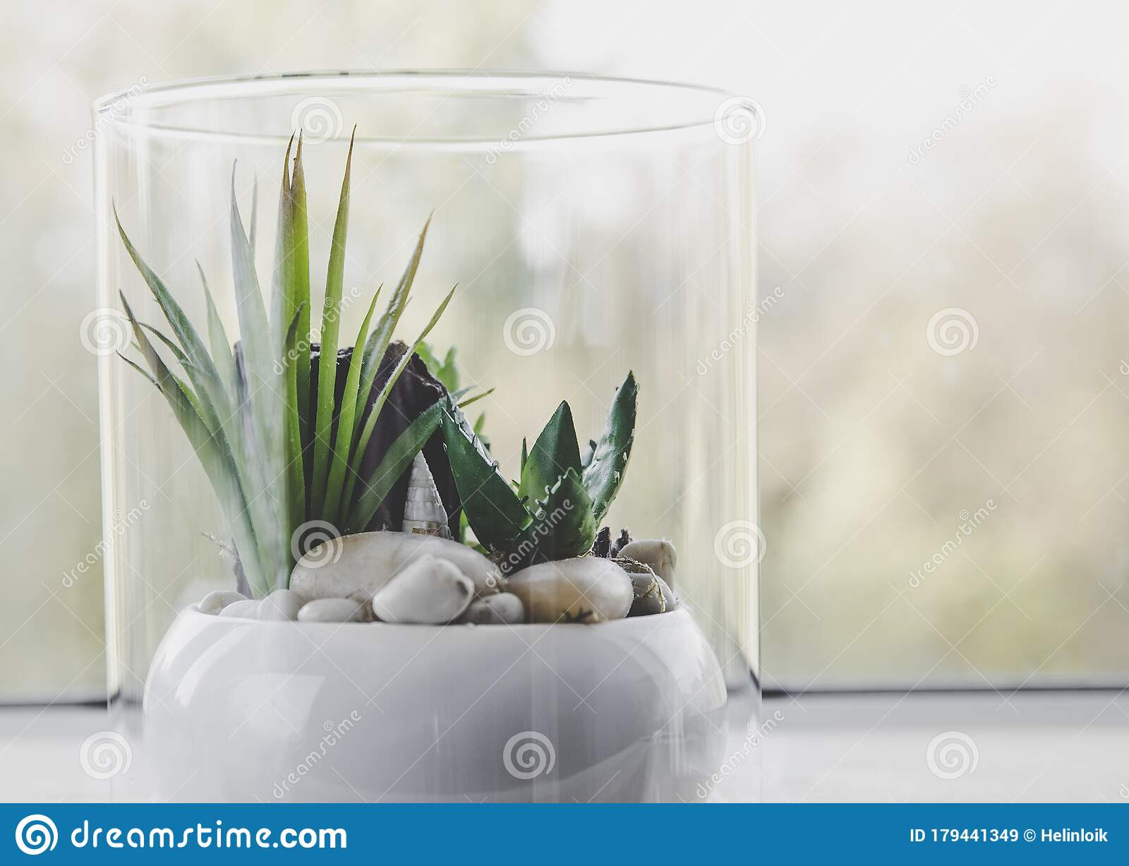 1 801 Terrarium Plants Photos Free Royalty Free Stock Photos From Dreamstime