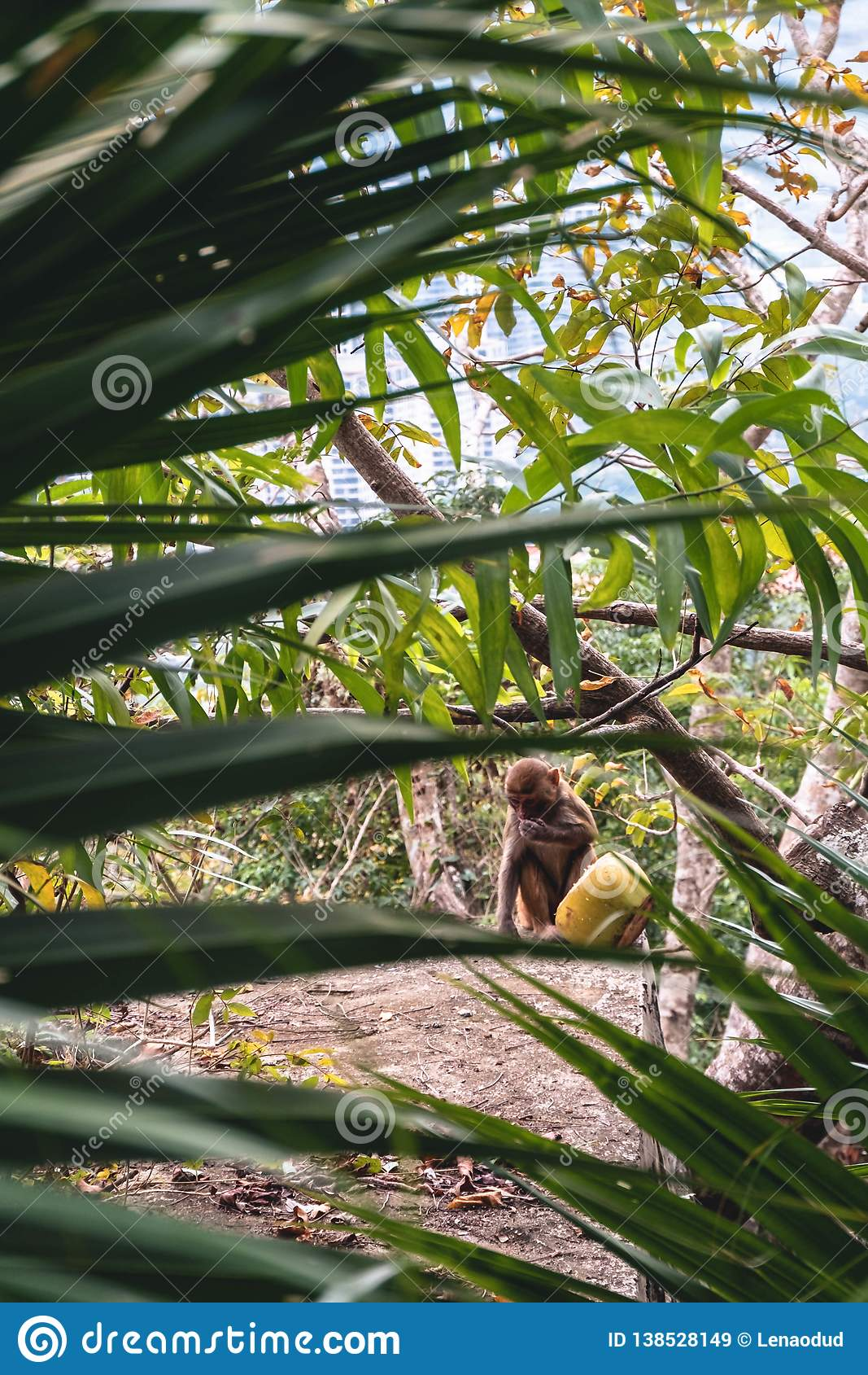 Small monkey with yellow coconut sitting in green palm forest