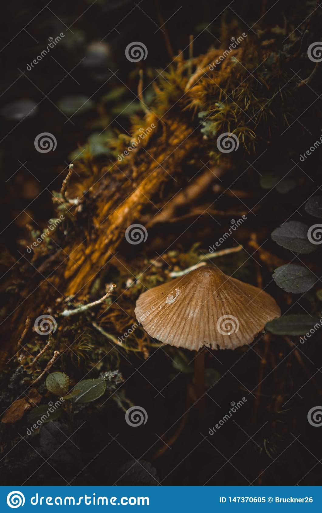 A small mushroom on the background of plants