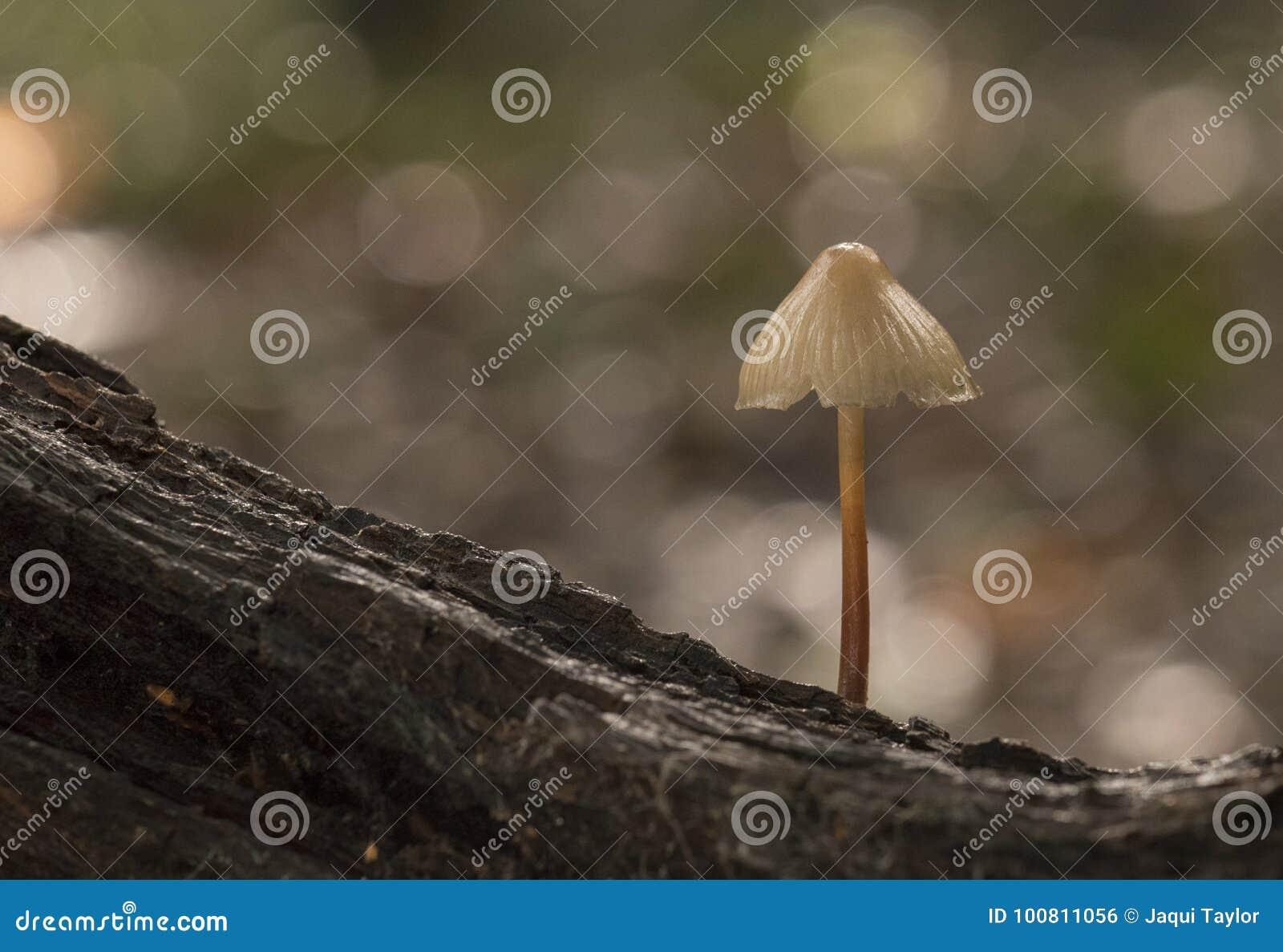 A small mushroom, Southampton Common