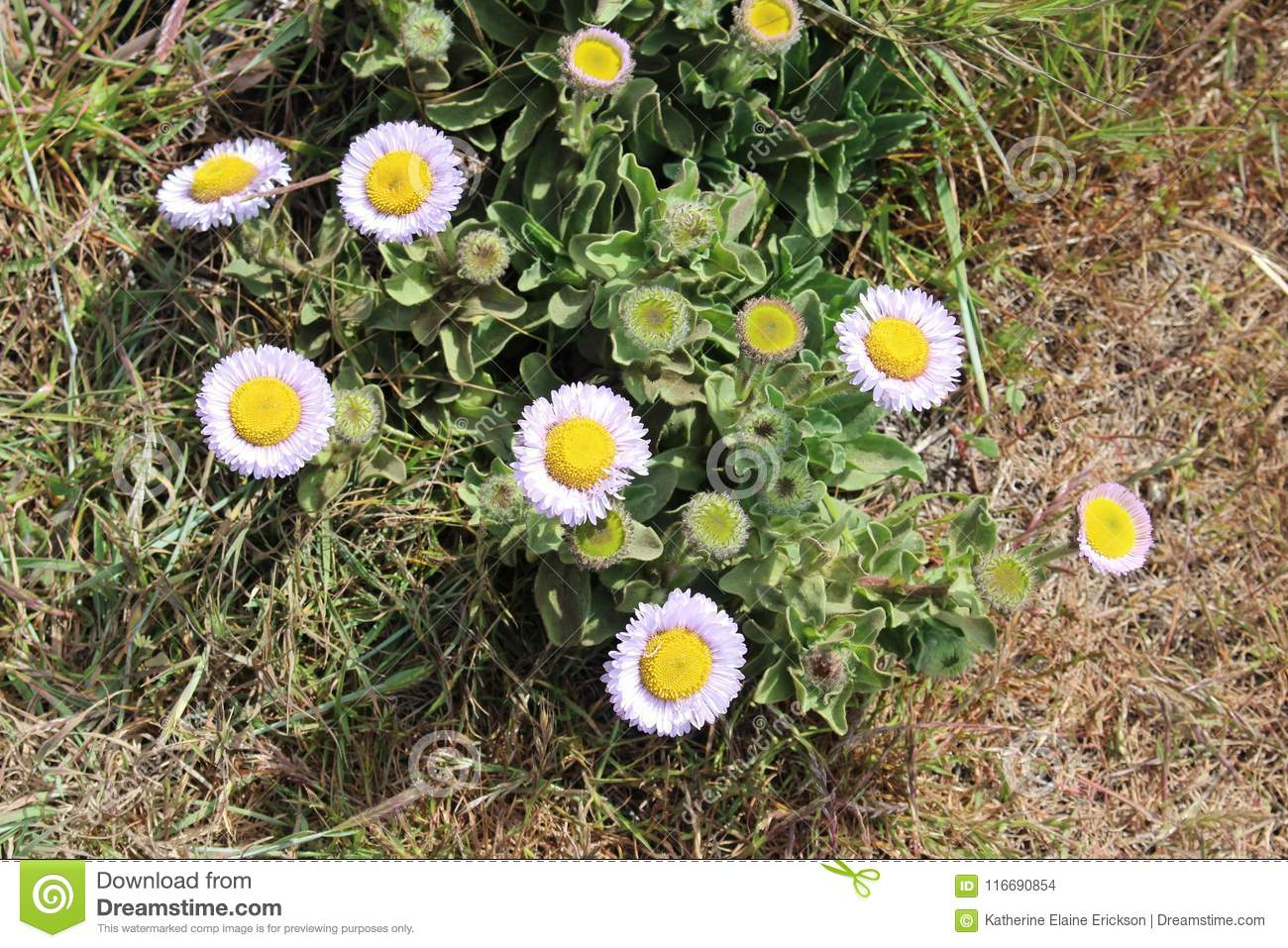 Small Native Plants With Purple Flowers Stock Photo Image Of