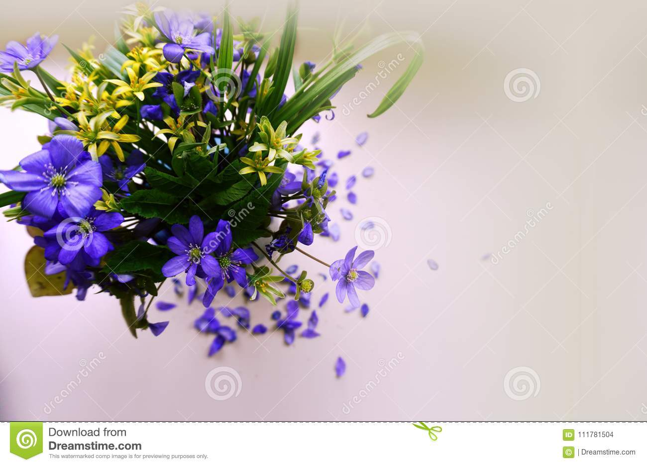 Blue And Yellow Spring Flowers On A White Background Stock Photo