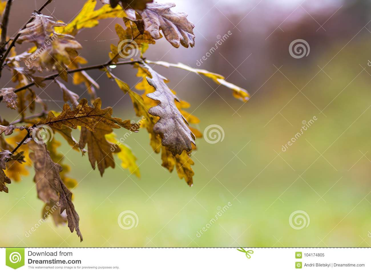 Small Oak Tree With Yellow Leaves In Autumn Stock Image - Image of ...