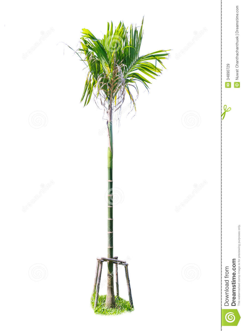 Small Palm Trees Stock Image Image Of Garden Beautiful