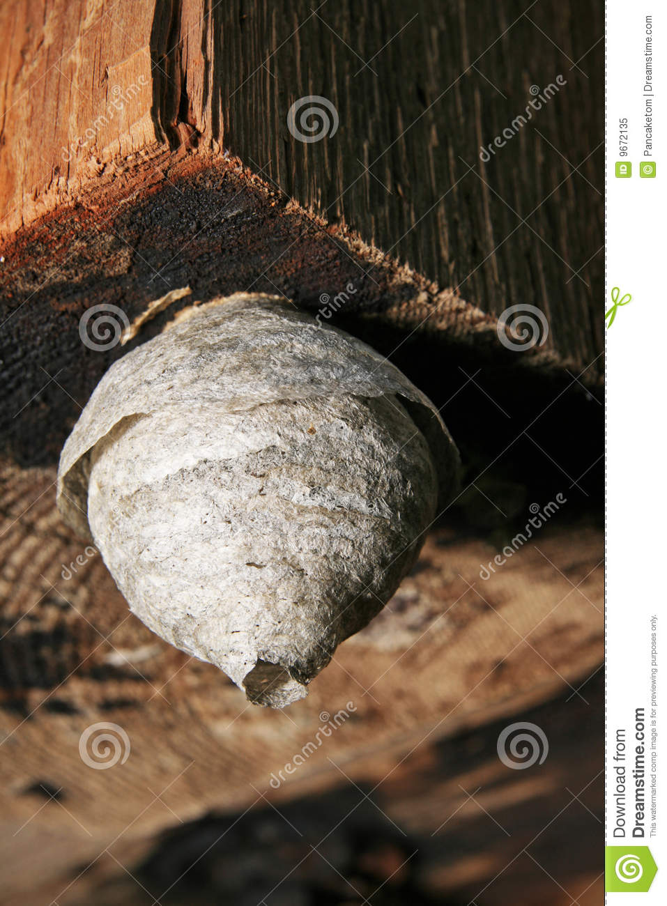 Small paper wasp nest