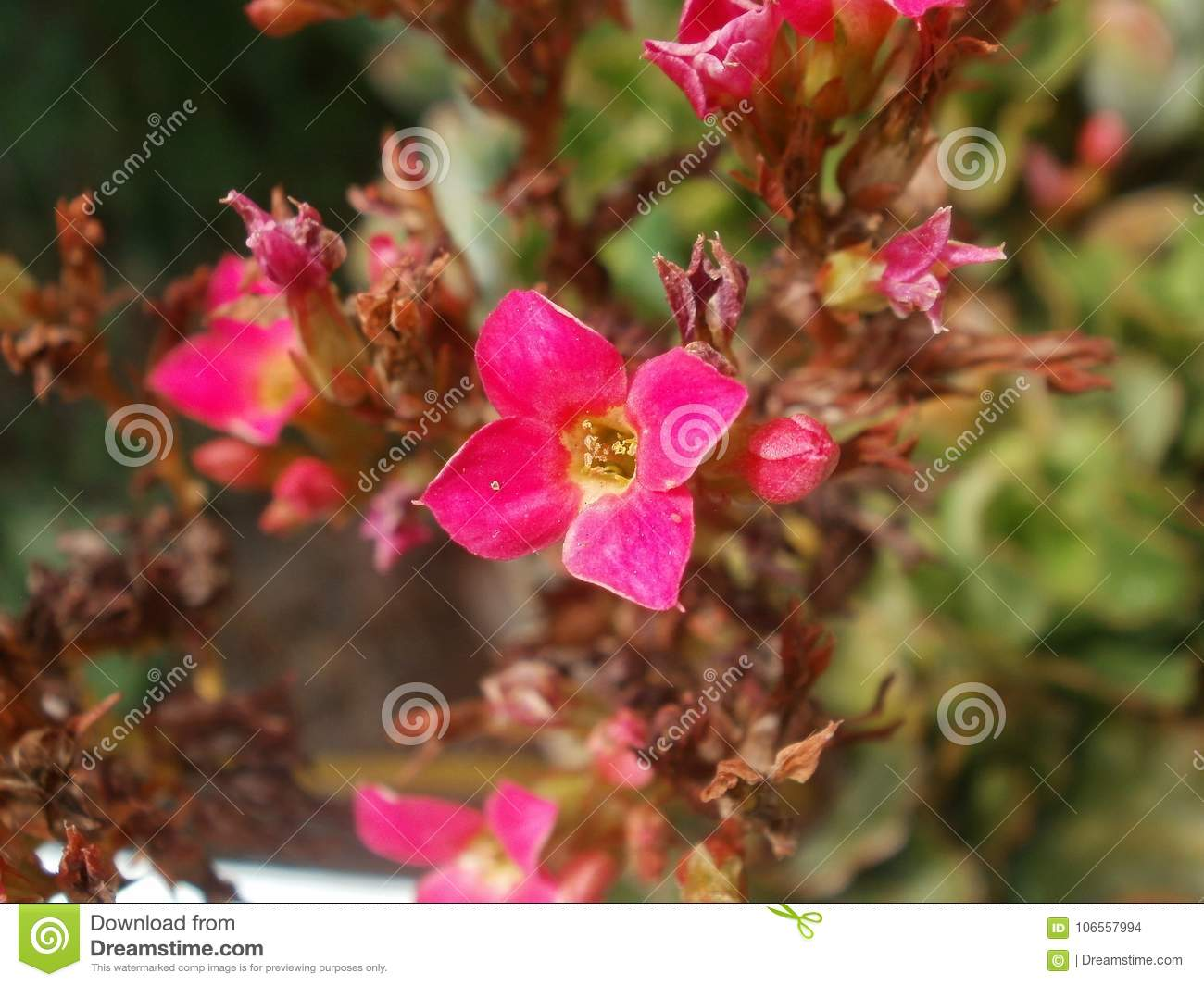 Small Petit Pretty Pink Flower Stock Photo Image Of Bright Petals