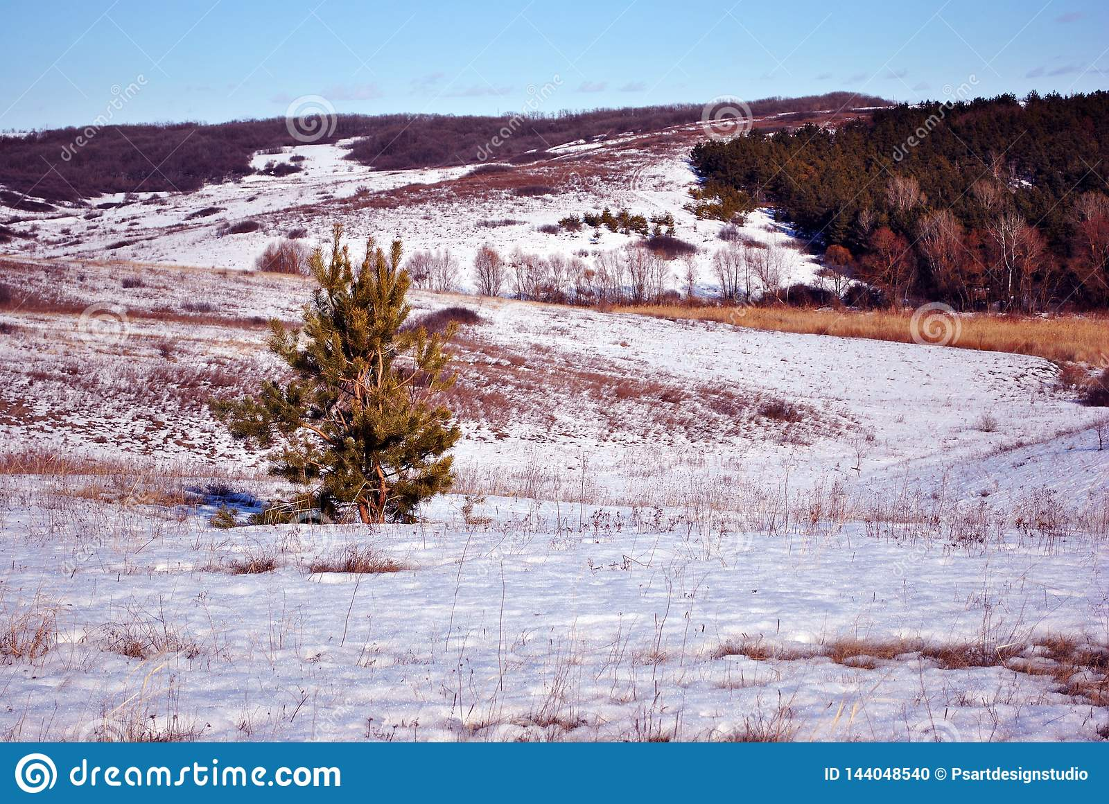 Small pine tree on hill covered with snow, forest and sky on background