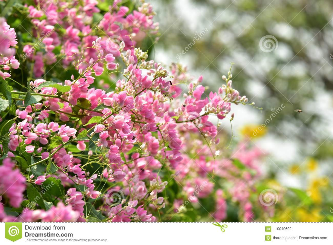 Small pink flower blossom on its tree in springtime stock photo small pink flower blossom on its tree in springtime mightylinksfo