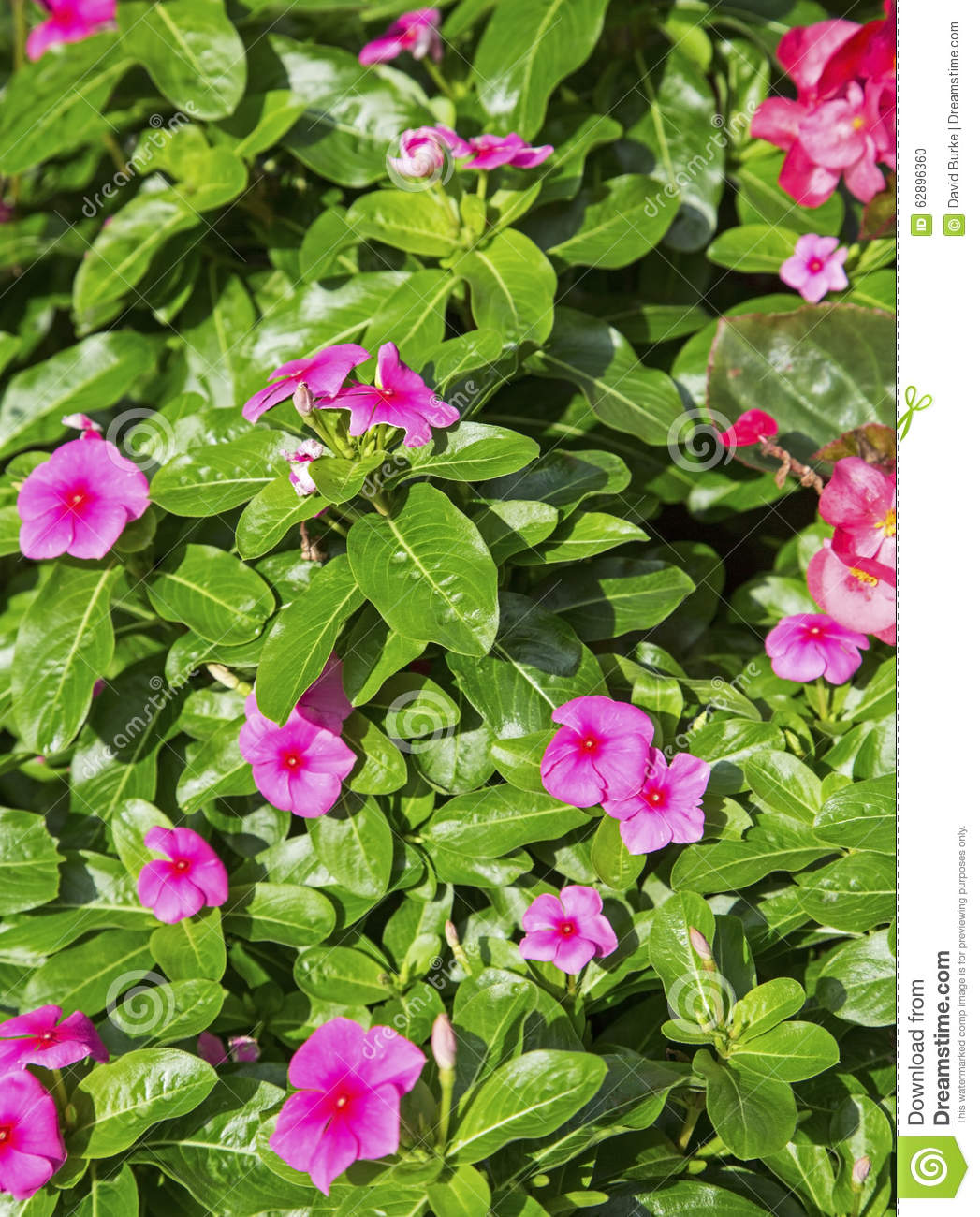 Small Pink Flowers Background Stock Photo